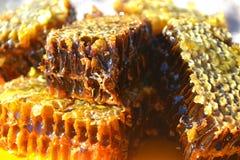 Honeycomb Obrazy Royalty Free