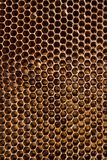 Honeycomb. Macro picture of empty honeycell Stock Photography
