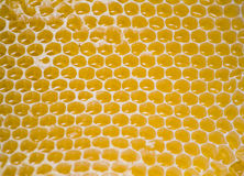 Free Honeycomb Stock Images - 6058344