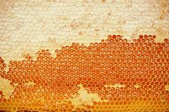 Honeycomb Fotografia Royalty Free