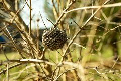 Honeycomb abandoned hanging on the branch nature stock images