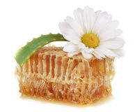 Honeycomb and aloe with chamomile Royalty Free Stock Images