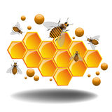 Honeycomb And Bees Stock Photos