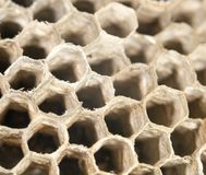 Honeycomb as background Royalty Free Stock Photography