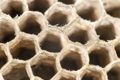 Honeycomb as background Stock Photo