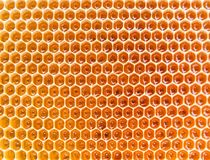 Honeycomb as a texture Stock Images