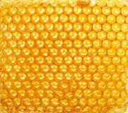 Honeycomb background. Yellow honeycomb wax cell detail texture background Royalty Free Stock Images