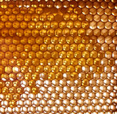 Honeycomb background Royalty Free Stock Image