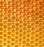 Honeycomb background. Golden honeycomb wax cell detail Royalty Free Stock Photos