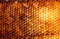 Honeycomb background. Natural honeycomb background or texture Stock Image