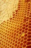 Honeycomb background Stock Photography