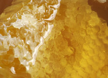 Honeycomb background. Honey and honeycomb in closed kitchen jar; excellent background Stock Photos