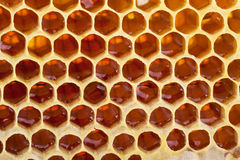 Honeycomb background royalty free stock photo