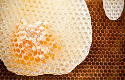 Honeycomb background texture Stock Images