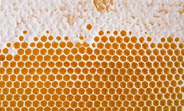 Honeycomb background. Texture of bee wax honeycomb from beehive filled with Golden honey royalty free stock image