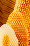 Honeycomb background. Yellow and white honeycomb background, beeswax Stock Photos