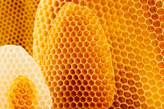 Honeycomb background. Yellow and white honeycomb background, beeswax Royalty Free Stock Photo