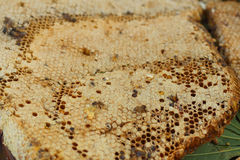 Honeycomb on a banana leaf in market.  Royalty Free Stock Photo