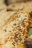 Honeycomb on a banana leaf in market.  Royalty Free Stock Photography