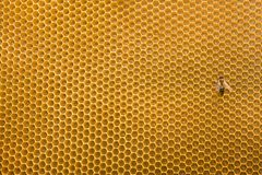 Honeycomb and bee Stock Images