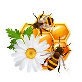 Honeycomb bee flowers emblem Stock Images