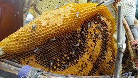 Honeycomb and bee Stock Photos