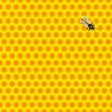 Honeycomb with bee Royalty Free Stock Images