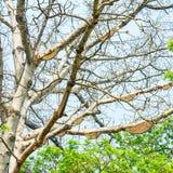 Honeycomb or beehive on the big tree. Stock Image