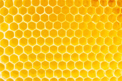 Honeycomb. In beehive, closeup Royalty Free Stock Photos