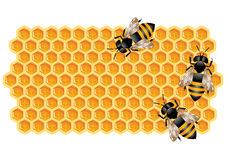 Honeycomb with Bees. Vector illustration representing background with bees working on honeycomb Stock Photos
