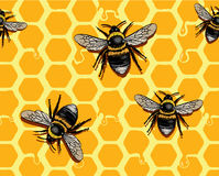 Honeycomb and Bees. Bees on honeycomb. Additional  format Illustrator 8 eps Royalty Free Stock Photography