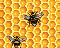Honeycomb and Bees vector illustration