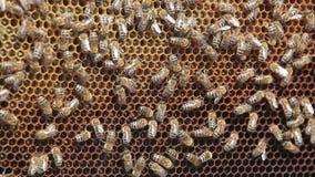 Honeycomb stock video