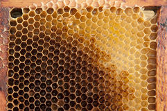 Honeycomb. Without bees, just empty Royalty Free Stock Images