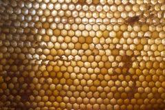 Honeycomb Royalty Free Stock Image