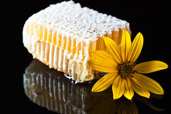 Honeycomb  on black reflexive background Royalty Free Stock Photography