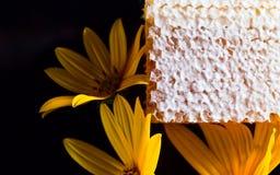 Honeycomb  on black reflexive background Stock Image
