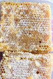 Honeycomb with candied honey Stock Photo