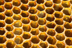 Honeycomb candy. Extreme close up Royalty Free Stock Image