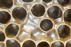 Honeycomb candy Stock Photo
