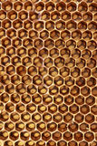 Honeycomb cells close-up with honey.  royalty free stock photo