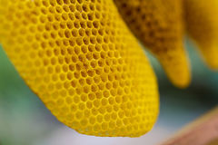 Honeycomb cells close-up Stock Images