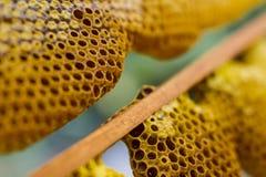 Honeycomb cells close-up Stock Photos