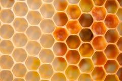 Honeycomb cells closeup Royalty Free Stock Images