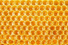 Honeycomb cells natural background Royalty Free Stock Image