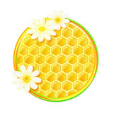 Honeycomb in circle with camomile flower Royalty Free Stock Photo