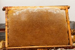 Honeycomb Close Up Stock Photography