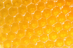 Honeycomb close-up. Yellow honeycomb extremу close-up Stock Image