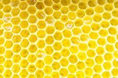 Honeycomb. Close up on texture Royalty Free Stock Photos