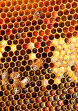 Honeycomb closeup Stock Images